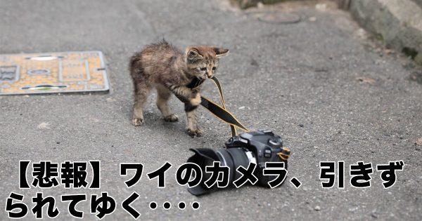 「猫のイタズラ現場」はなぜか癒される…8選