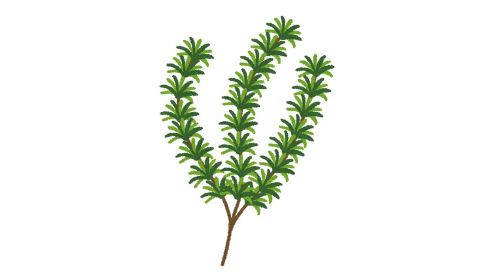 飾り 性格 植物 例える 心理テスト