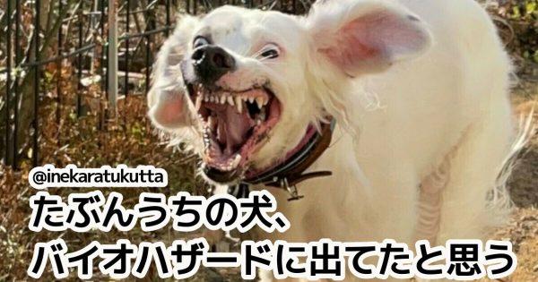 犬って表情豊かすぎて、毎日笑いが絶えんよな。7選