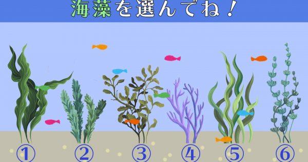 【心理テスト】あなたの性格は「自分のココが好き!」気になる海藻を選んでね