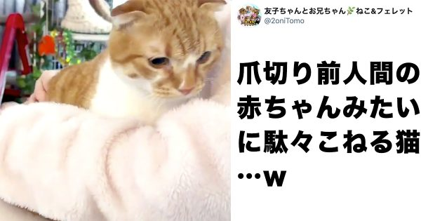 「爪切りヤダ…」猫ちゃんのイヤイヤがまるで人間の赤ちゃん😇