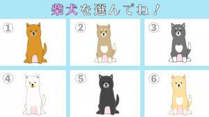 【心理テスト】あなたは「好きな人を前にすると」どんな性格?柴犬テスト