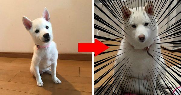 【13万いいね】ガリガリに見えた子犬の幸せビフォーアフターにほっこり😊