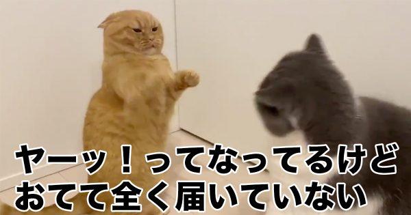 猫パンチが不発になった理由は?「平和すぎるケンカ」が可愛い…♡