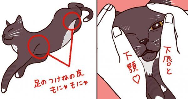 【手が生傷だらけ】猫を飼い始めた人が「初めて知ったこと」にチョ〜共感!