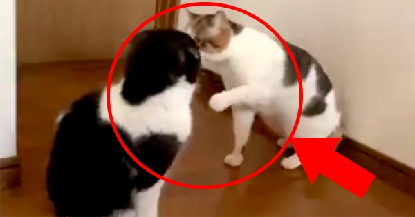 優しい世界…猫の喧嘩が平和すぎて和みレベルMAX