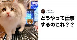 「テレワーク×猫」の相性は「最悪」だとわかる証拠がこちら 8選