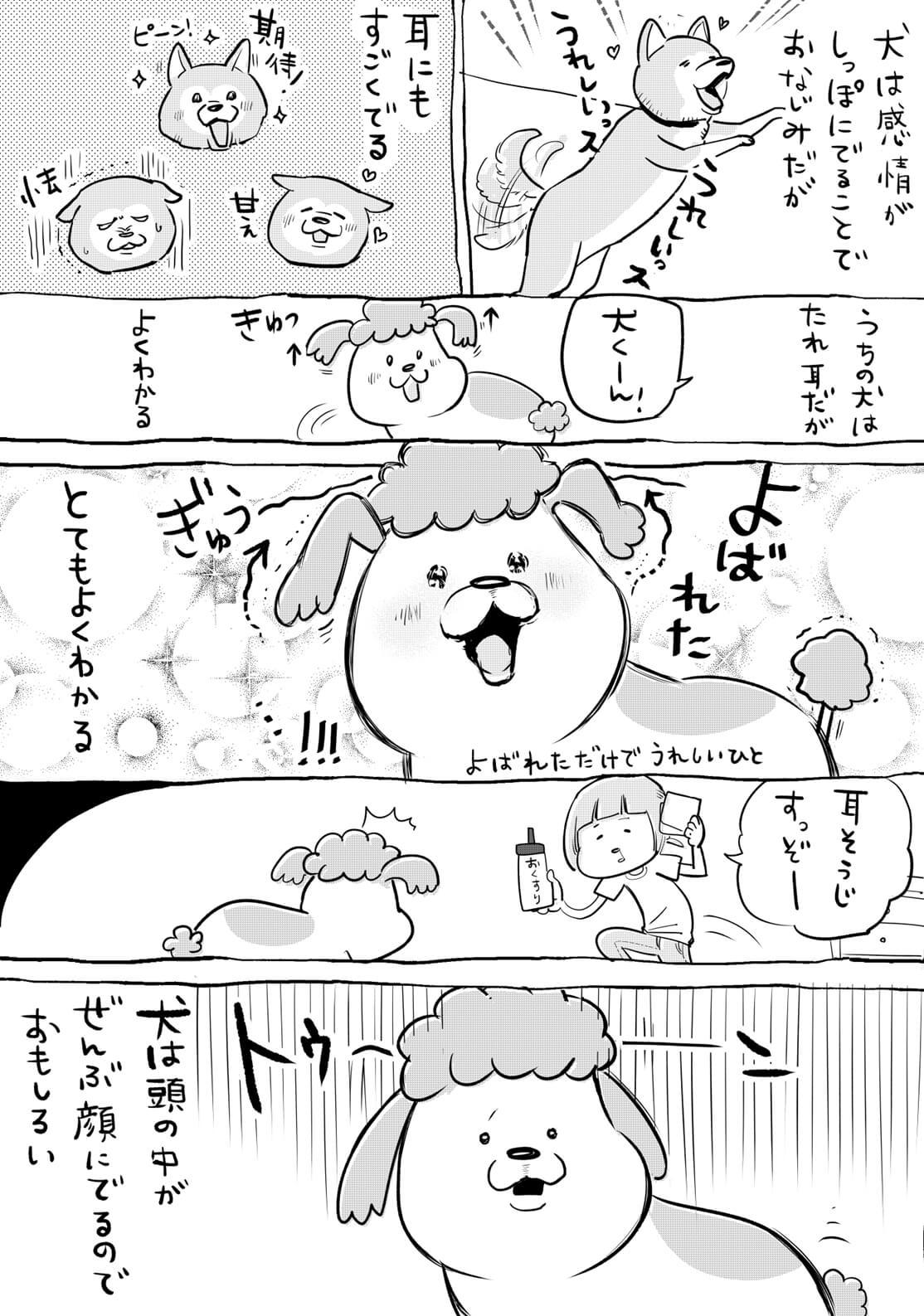 犬と猫01