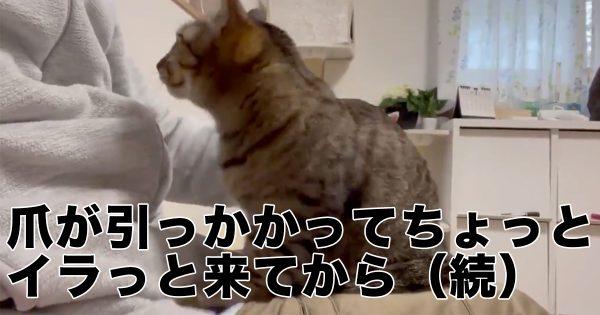 【17万人が悶絶】甘え上手な猫ちゃんにメロメロにされた…♡