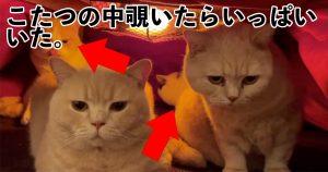 どんだけおるねんwwwこたつを覗いたら「猫祭り開催中」だった件