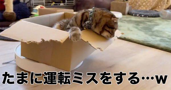 【27万いいね】ルンバを運転中の猫に3秒後悲劇が…www