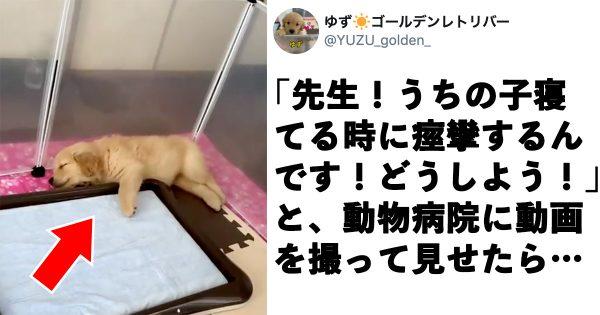 【獣医さんもニッコリ!】子犬の「ピクピク動画」が75万回も再生された理由に和んだ