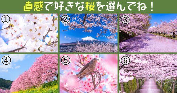 【心理テスト】春の桜で、「あなたが注目を集めたがってるか」深層心理を暴きます…