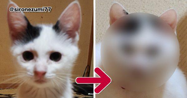 丸くなりました!「猫の成長ビフォーアフター」がなぜか泣ける… 8選