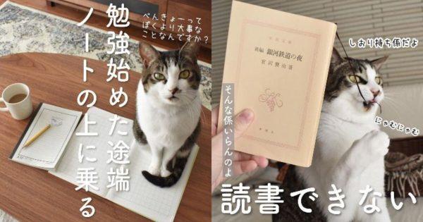 【癒し500%】猫好きの悩みと幸せを詰め込んだ「猫あるある」シリーズ