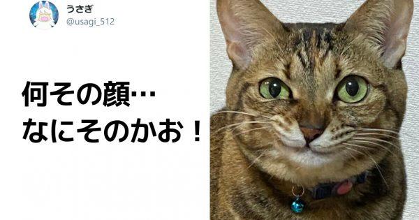 動物たちの「本気のドヤ顔」がジワるw 8選
