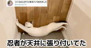 【難問】このときの「猫の気持ち」を答えよ 7選