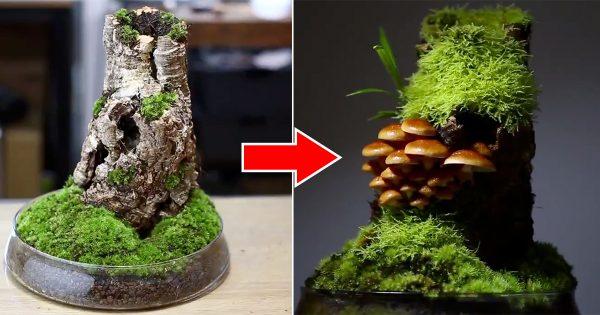 【1分動画】なめこが盆栽に?神秘的な「きのこリウム」の世界に癒される…