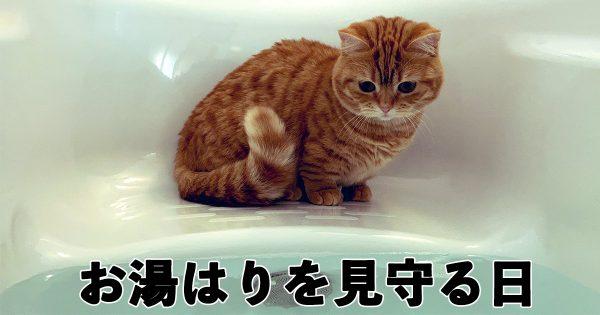 【14万いいね】猫の「お風呂番」が可愛すぎてとろける🥰