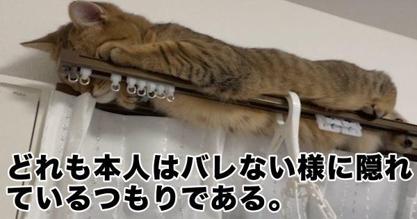 かくれんぼ「ヘタ過ぎ」猫ちゃんに、もうメロメロです…♡