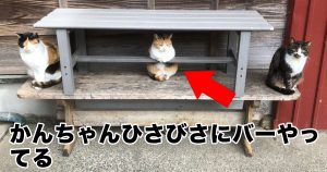 「ネコの経営するBAR」がこんな所に!4万人が悶絶
