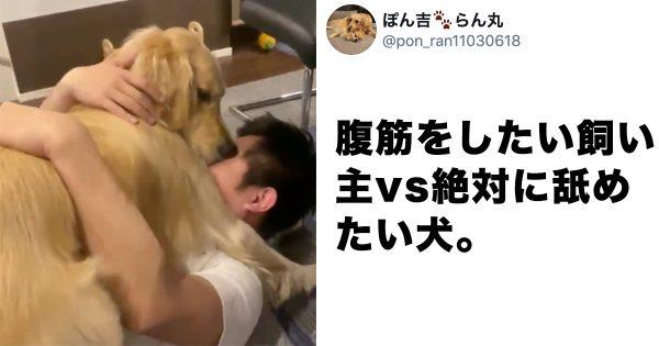 【犬あるある】愛情激しめゴールデンレトリバー、飼い主が大変なことにw