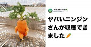 「お前、野菜か?」 8選
