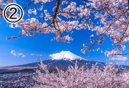 桜 目立ちたがり屋 心理テスト