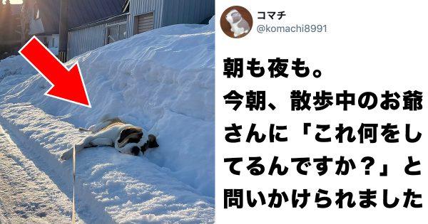 【行き倒れじゃないよ】朝も夜も同じ場所で寝てる犬に理由を聞きたい