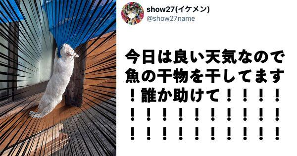 【速報】「ドロボウ猫」の語源、見つかる