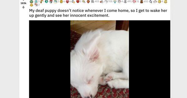 耳の聞こえない子犬が「飼い主に気づいた時」のリアクション、愛が溢れてると話題に