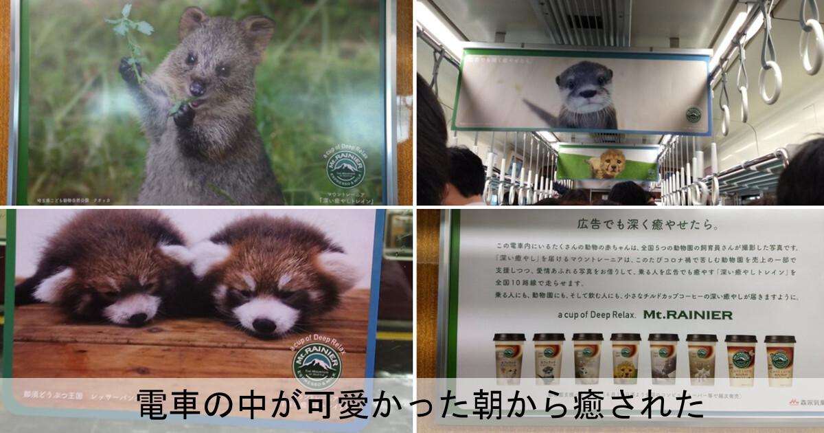 動物達が電車でジャック!その可愛いさに思わず癒された