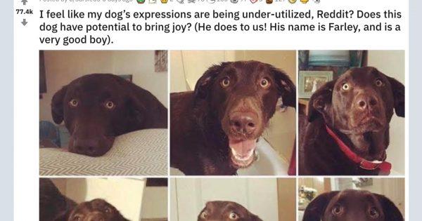 見るだけでハッピーな気分になる犬…「人間みたいな百面相」と話題に