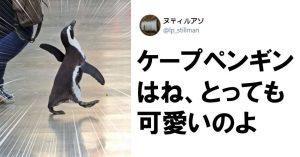 ペンギン、ユキヒョウ… 動物園が「萌え」の宝庫だった件 8選
