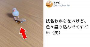 【22万再生】オリンピックレベルの「文鳥スケボーテク」に驚愕