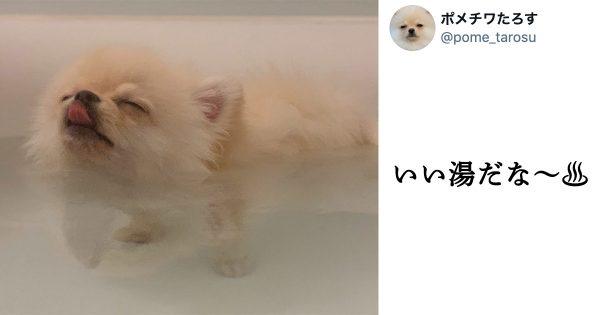 【4万いいね】風呂好きワンコの「最幸のとろけ顔」を見てくれ…!