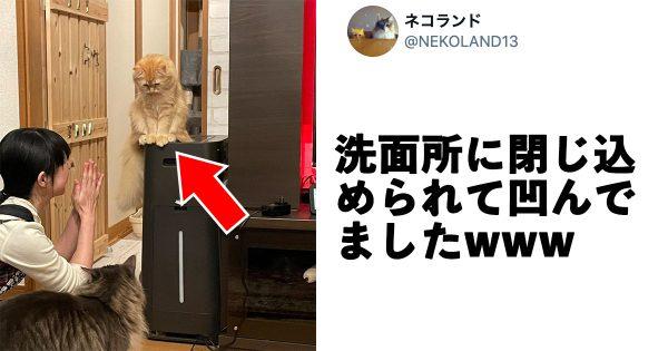 【めっちゃ凹んでるww】今年一の「しょんぼり猫」は確実にこの子だろうな…