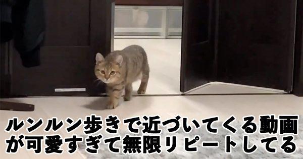 ディズニー感あふれる「猫のルンルン歩き」がたまらん可愛さだわ…
