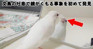 13万人がキュンとした「世界一の文鳥フォト」が超ステキ