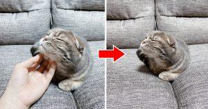 【見事な3コマオチ】至福の表情から一転「時間差でキレる猫」が最高にキュート♥