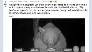 【意外と高級志向】実験動画「野生のクマにハチミツ選ばせてみた」に大反響