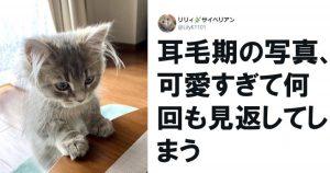 飼い主の皆さん、「猫との日常」ってこんな幸せなんですか? 9選