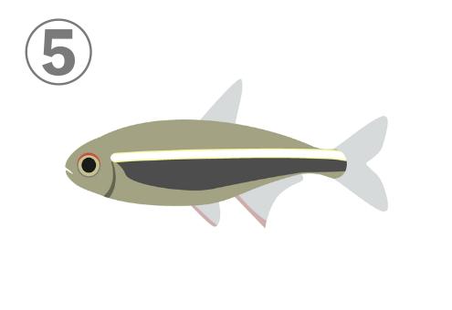 カーキ色に白とグレーの線が入った熱帯魚