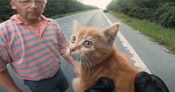 【緊迫の20秒】ドラレコが捉えた「子猫の救出劇」にYouTube上で賞賛の嵐