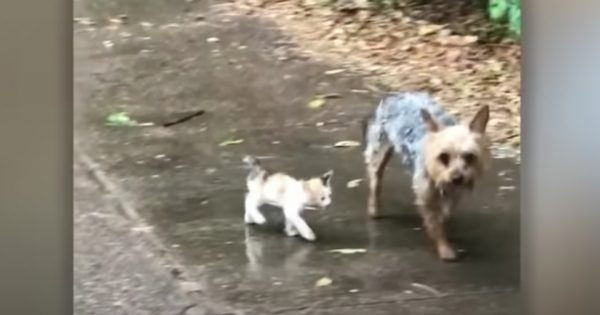 雨のなか子猫を保護したのは…ワンコ!?動物の持つ愛情深さに「泣いちゃった」の声