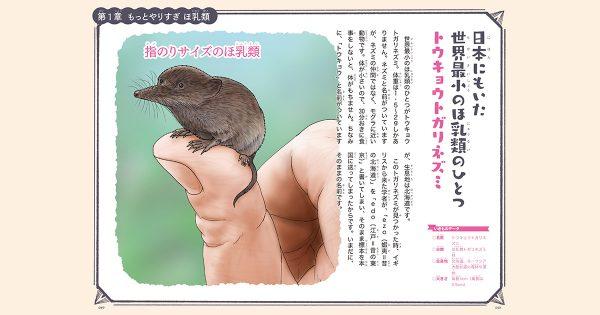 【もっとやりすぎ いきもの図鑑 第5話】世界最小のほ乳類「トウキョウトガリネズミ」