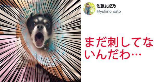 【音量注意】「注射する前から痛がる犬」の迫真の絶叫…兄との温度差に「つい笑っちゃう」