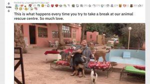 【動物が集合】「ディズニープリンセスみたいなおじさん」の動画が海外で話題