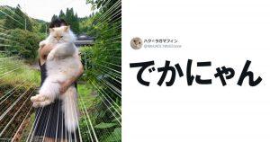 猫飼いさんの写真フォルダって宝の山かよ 7選