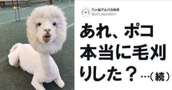 【ドリルふくろう】ねぇコレ「新種の動物」で合ってる…? 7選